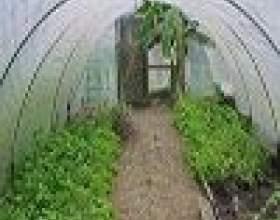 Як вирощувати розсаду в теплиці, поради дачникам фото