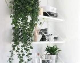 Кімнатні рослини обереги по фен шуй фото
